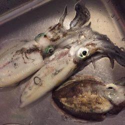 太刀魚の邪魔がなければ