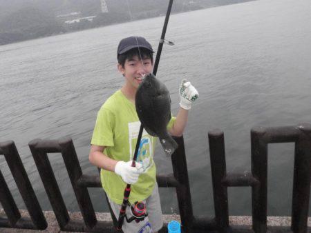20cmのイワシが釣れます