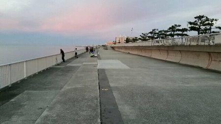 大蔵海岸朝マズメ。タチウオ堅調でした。