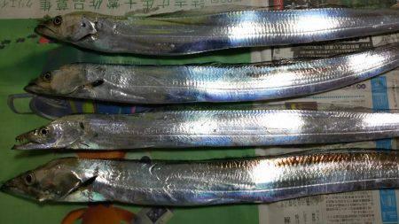 ワインド太刀魚