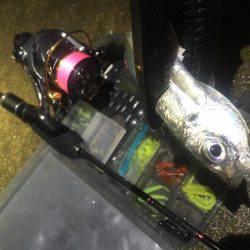 釣れるかな〜❓