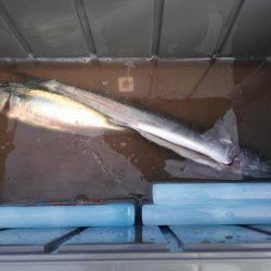 サバ釣れました