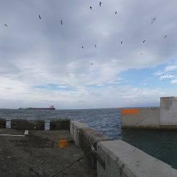 劇荒れ北港