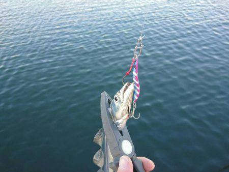 メタルジグで太刀魚♪