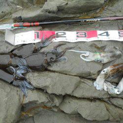 うねりの中、磯でアオリイカのヤエン釣り