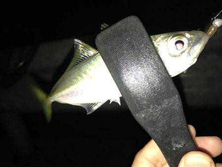 イカ釣り♪
