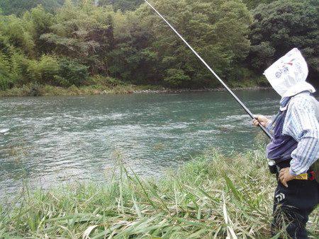 安倍川・藁科川(安倍藁科川漁業協同組合) 釣果