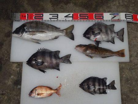 のとじま臨海公園海づりセンター 釣果