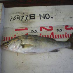 姫路市立遊魚センター 釣果