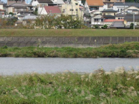 狩野川(狩野川漁業協同組合) 釣果