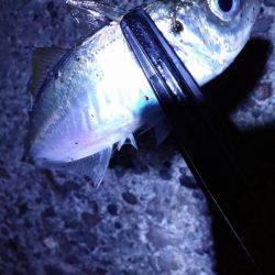 太刀魚GET!!