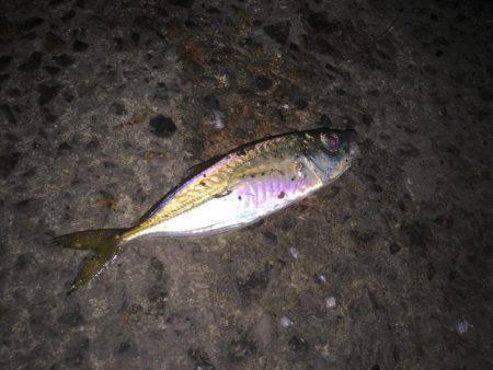 アジング釣行①