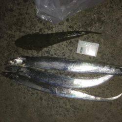 太刀魚ぉ〜