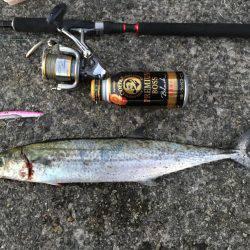 釣り人生一番の大物