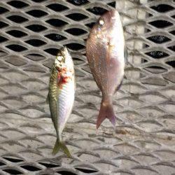 のませ釣り