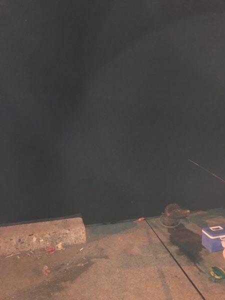 夜サビキ釣り