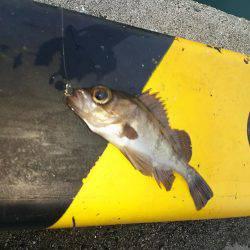 アジを釣りに!