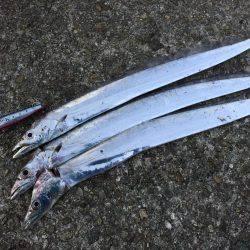 タチウオ釣行①