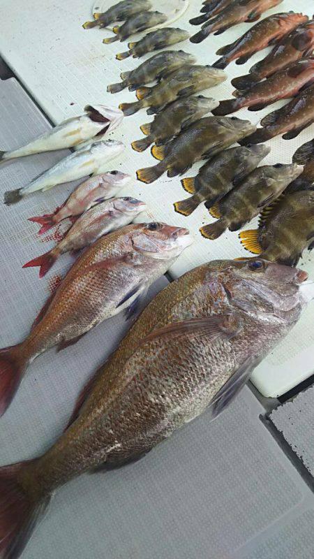 タイラバ遊漁船 ワンピース 釣果
