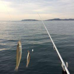 千葉方面にて冬のキス釣り【WK釣り日記 No.05】