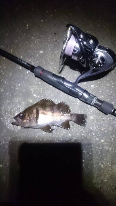短時間釣行。