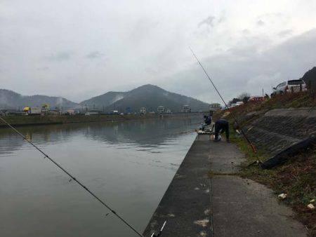長命寺川のホンモロコ