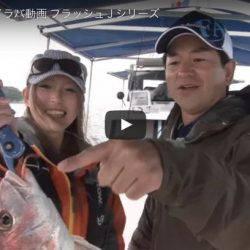 【2017.5.2 動画追加】2017急上昇トレンドワード、フラッシング鯛ラバ