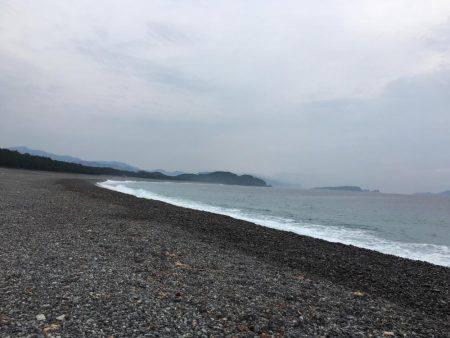 大里松原海岸 シマフグ40cm