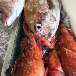 漁與丸 釣果