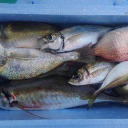 泉州丸 釣果