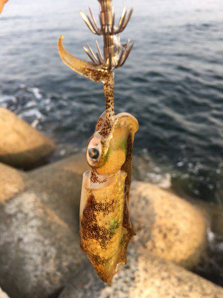 タチウオは釣れず。