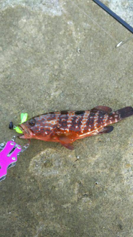 2日間根魚三昧