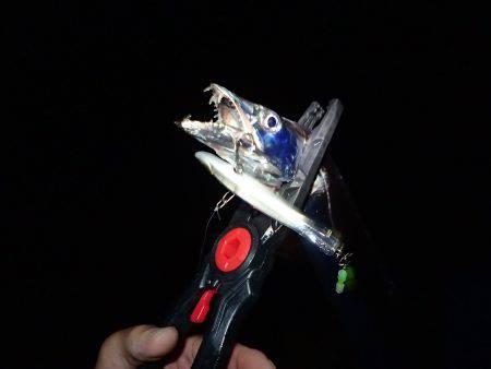 沖堤防で太刀魚!