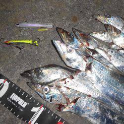 沖堤太刀魚