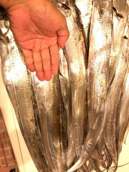 ポートアイランド タチウオエサ釣り入れ食い!