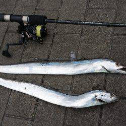 大阪南港でルアーの太刀魚