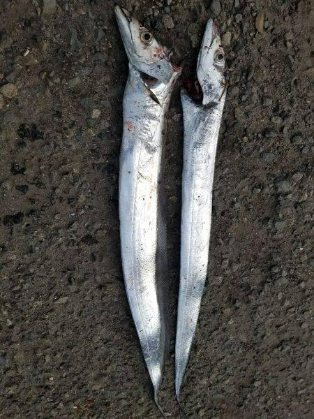 タチウオ釣り…マナー悪し…