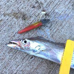 ダイソージグで太刀魚釣り