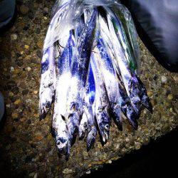 太刀魚たくさん釣れました(^-^)