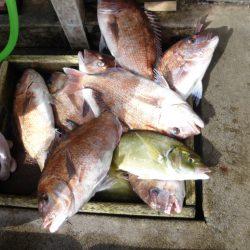 海釣り公園みかた 釣果