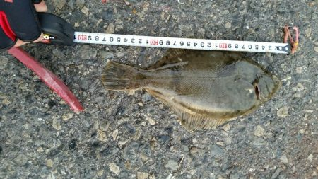 渋い中魚種多様