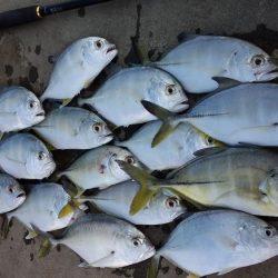 ショアジギング 和歌山のカンパリオススメ釣り情報!2017年12月