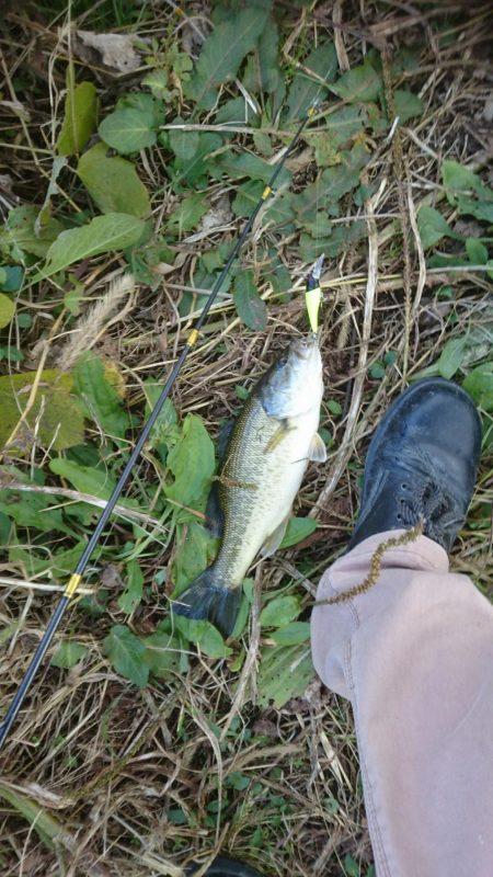 まだ釣れました