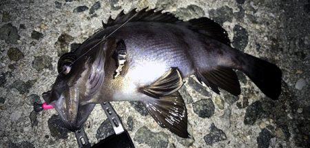 海釣り 初心者にも分かる釣り方紹介 ルアー釣り編