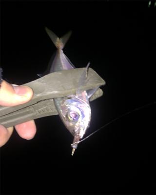 初釣りアジング!