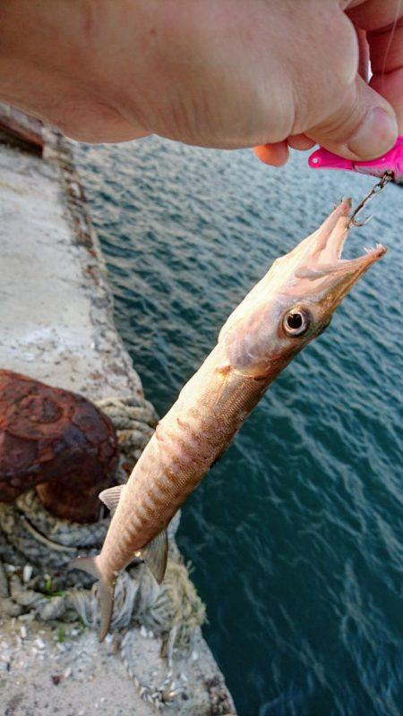 西表島でメアジが釣れました。