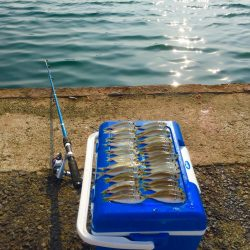 大阪に家族でサビキ釣りに行こう!ファミリーフィッシング サビキの釣り情報1月〜6月