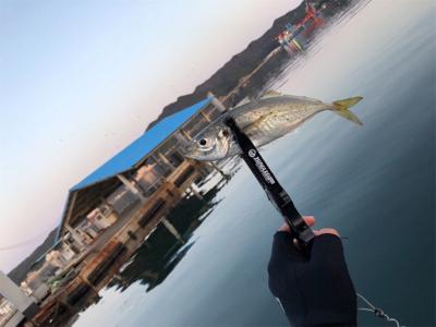 鯖祭り〜のプラッキング@福良漁港