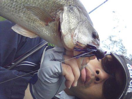 高山ダム釣れ始めています
