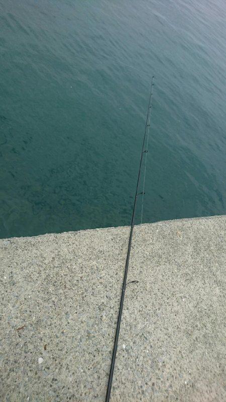 今年初キス釣り